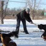 Dogs Social